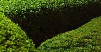 Mars, nouveau départ jardin haie